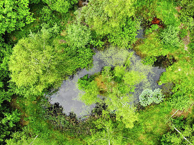 Photograph - Pond And Trees In Green Forest Aerial by Matthias Hauser