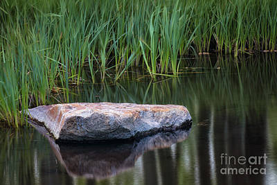Photograph - Pond by Anthony Bonafede