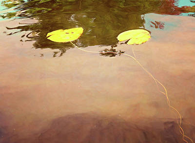 Photograph - Pond Art by Sue Collura