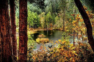 Pond At Golden Or. Art Print