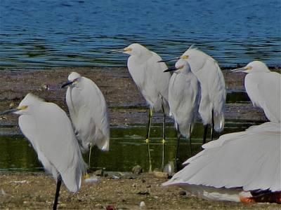 Photograph - Pond Birds by Vijay Sharon Govender