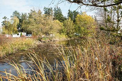 Photograph - Pond By Thompson Trail by Tom Cochran