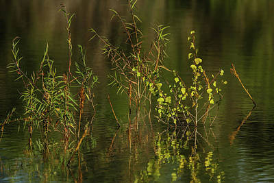 Photograph - Pond Color by David March