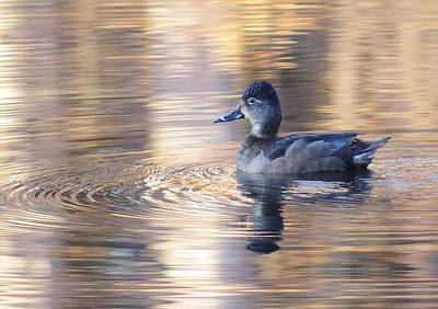 Photograph - Pond Duck  by Buddy Scott