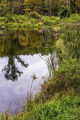 Photograph - Pond Edge by Fran Gallogly