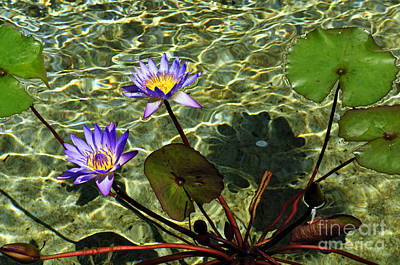 Photograph - Pond Florals by Clayton Bruster
