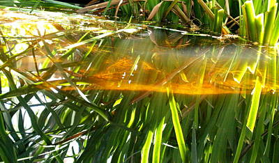 Photograph - Pond Grass I by James Granberry