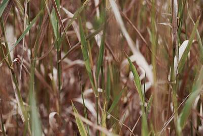 Photograph - Pond Grass by Photography by Tiwago