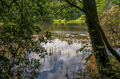 Photograph - Pond In Spring by James L Bartlett