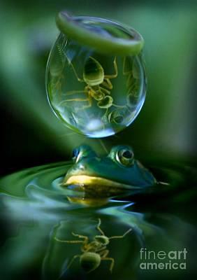 Photograph - Pond Life by Kym Clarke