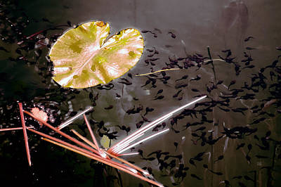 Photograph - Pond Life by Menega Sabidussi