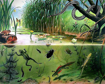 Digital Art - Pond Life by Pennie McCracken