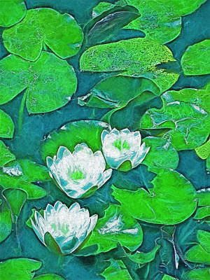Pond Lily 2 Art Print by Pamela Cooper