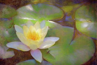 Photograph - Pond Lily 35 by Pamela Cooper