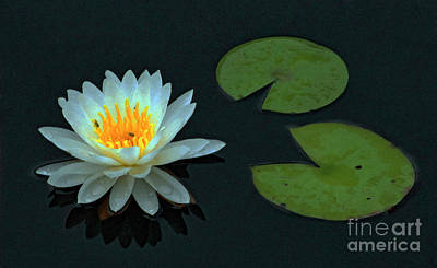 Photograph - Pond Lily by Joe Jake Pratt