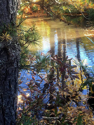 Photograph - Pond by Mark Alesse