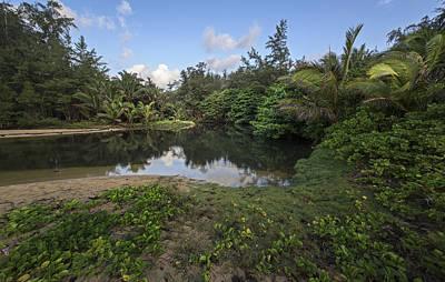 Pond Near The Beach Original