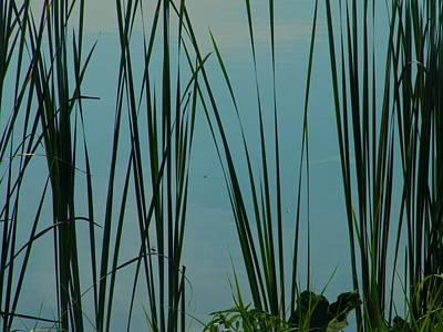 Pond Art Print by Nereida Slesarchik Cedeno Wilcoxon