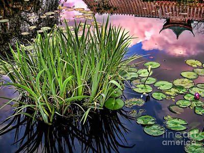 Photograph - Pond by Nora Martinez