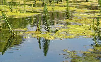 Photograph - Pond Plant Life by Jacek Wojnarowski