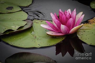 Photograph - Pond Posy by Grace Grogan