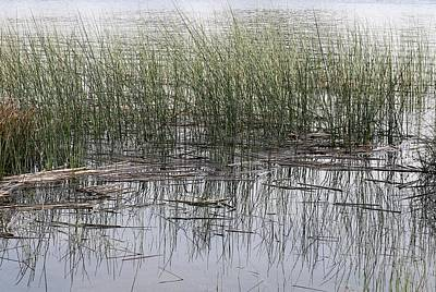 Photograph - Pond Reflections by Christy Pooschke
