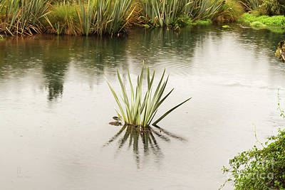 Photograph - Pond Reflections by Elaine Teague