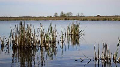 Photograph - Pond Reflections by Erick Schmidt