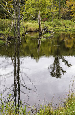 Photograph - Pond Reflections by Fran Gallogly