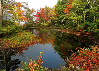 Photograph - Pond Reflections In Autumn by Nancy Griswold