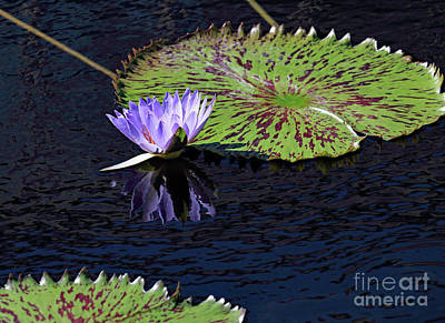 Photograph - Pond Reflections by Mary Haber