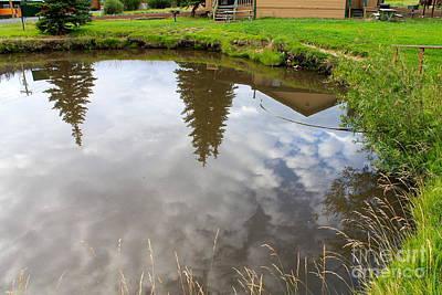 Pond Reflections Art Print by Pamela Walrath