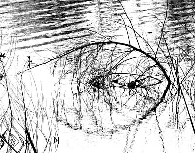 Photograph - Pond Study by Lizi Beard-Ward