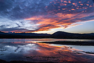Photograph - Pond Sunset by Cat Connor
