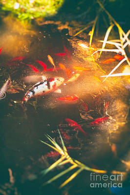 Photograph - Pond With Koi Fish And Goldfish by Silvia Ganora