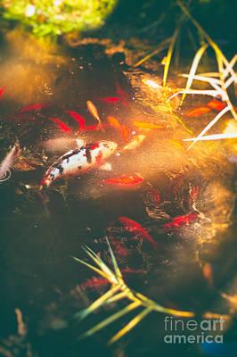 Photograph - Pond With Koi Fish And Goldfish by Silvia Ganora
