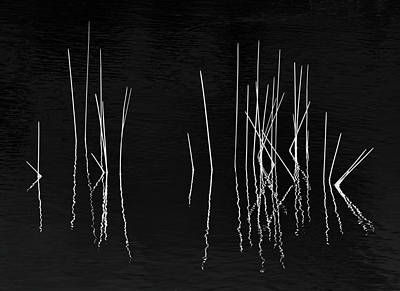 Photograph - Pond Zen by Carol Eade