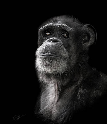 Chimpanzee Photograph - Ponder by Paul Neville
