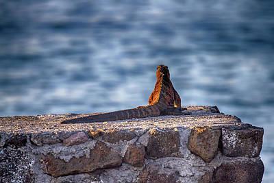 Photograph - Pondering by John Haldane