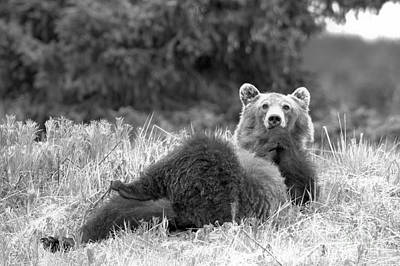 Photograph - Pondering Life At Banff Black And White by Adam Jewell
