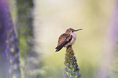 Photograph - Pondering Springtime by Susan Gary