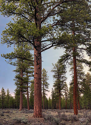 Old Growth Forest Photograph - Ponderosa Forest by Leland D Howard