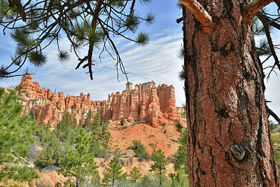 Photograph - Ponderosa Hoodoos by Ray Mathis