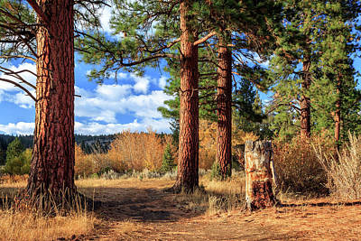 Photograph - Ponderosa Path by James Eddy