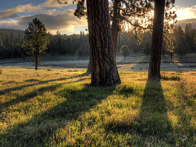 Ponderosa Pine Meadow Art Print by Leland D Howard
