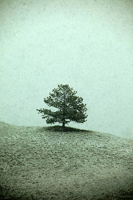 The Trees Photograph - Ponderosa Pine by Todd Klassy