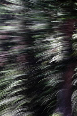 Photograph - Ponderosa Pine Twist by Deborah Hughes