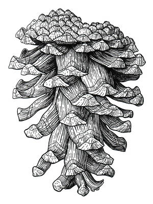 Drawing - Ponderosa Pinecone by Kirsten Wahlquist
