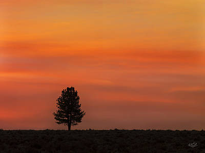 Colorful Photograph - Ponderosa Silhouette by Leland D Howard