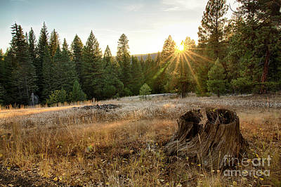 Photograph - Ponderosa Sunset by Idaho Scenic Images Linda Lantzy